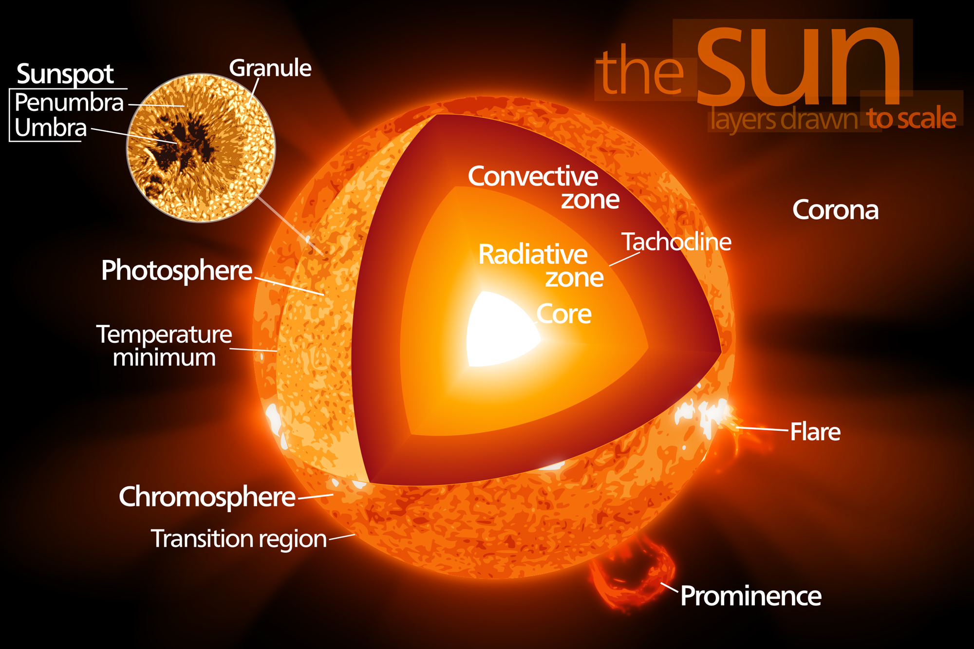 Sun  U2013 Formation  Thermal Nuclear Fusion  Structure  Future